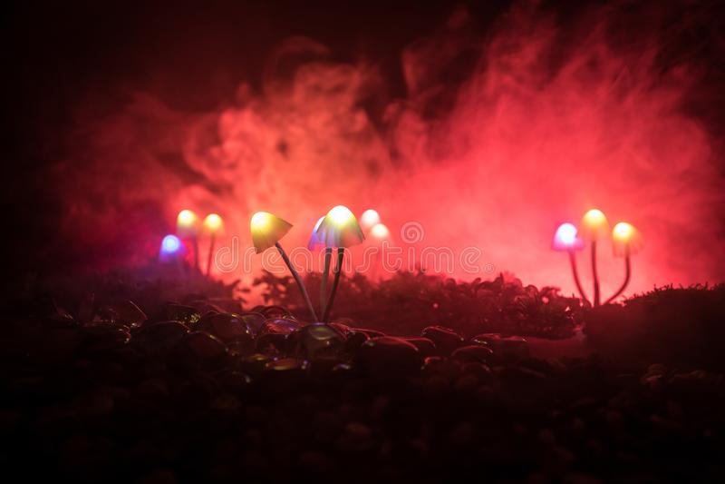 Fantasie Gloeiende Paddestoelen in geheimzinnigheid donker bosclose-up Mooi macroschot van magische die paddestoel of zielen in a stock foto