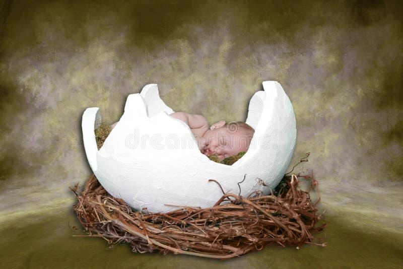 Fantasie-Portrait Ifant, das in gebrochenem Ei schläft lizenzfreie stockfotografie