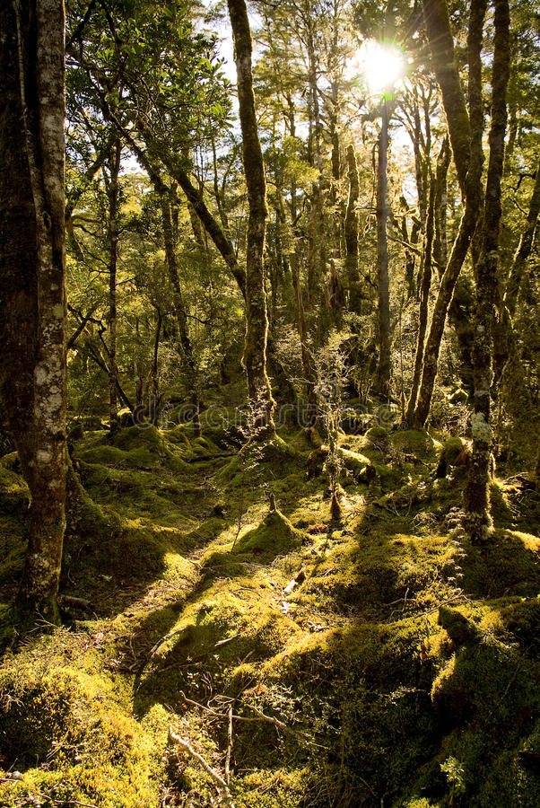 Fantasie-Wald lizenzfreies stockbild