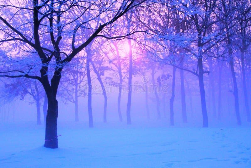 Fantasie am Wintermorgen lizenzfreies stockbild