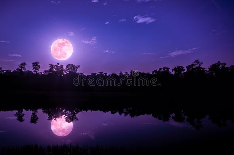 Fantasiehemel en heldere volle maan boven silhouetten van bomen en stock fotografie