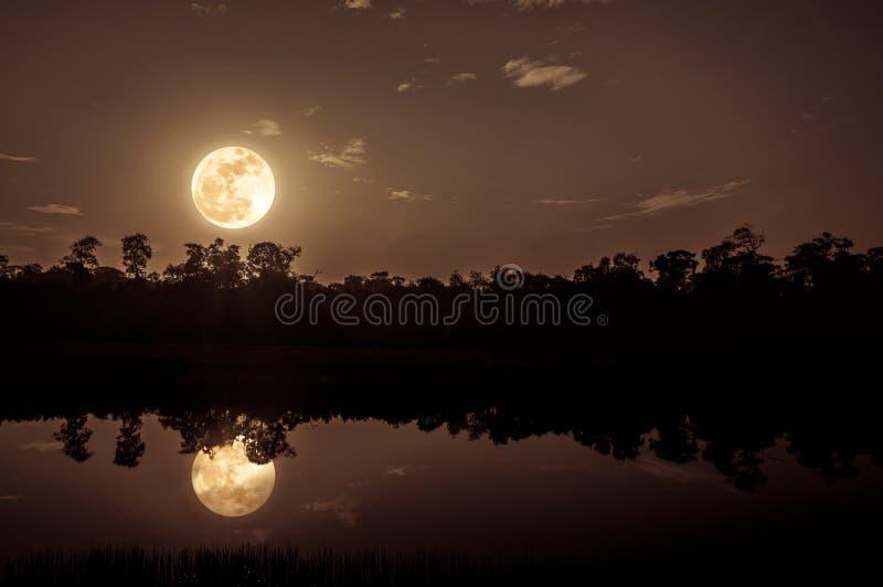 Fantasiehemel en heldere volle maan boven silhouetten van bomen en meer stock foto