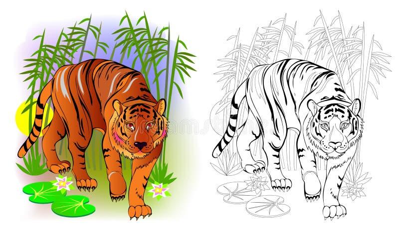 Fantasieillustratie van leuke tijger in de wildernis Kleurrijke en zwart-witte pagina voor het kleuren van boek Voor het drukken  royalty-vrije illustratie