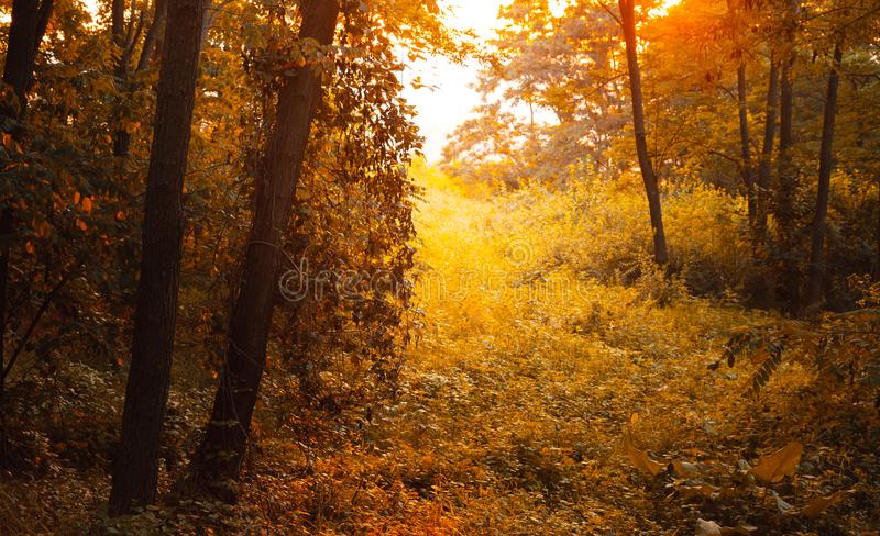 Fantasielandschap in de bos Mooie zonsopgang in bos stock fotografie
