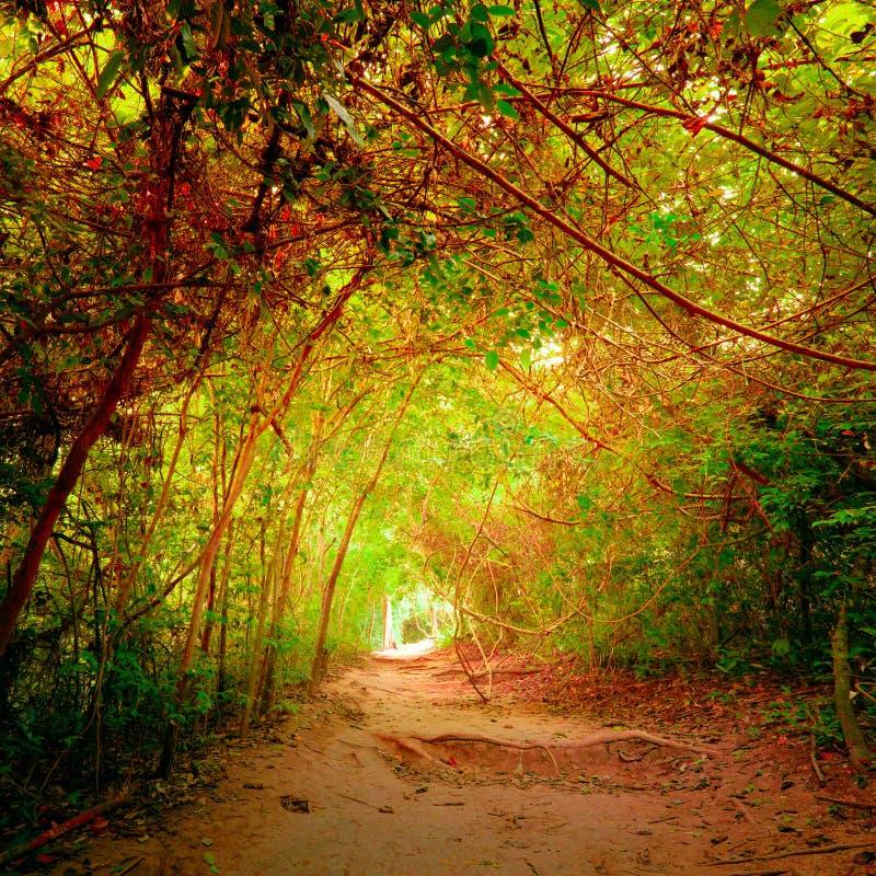 Fantasiewald in den Herbstfarben mit Tunnel- und Wegweise stockfotos