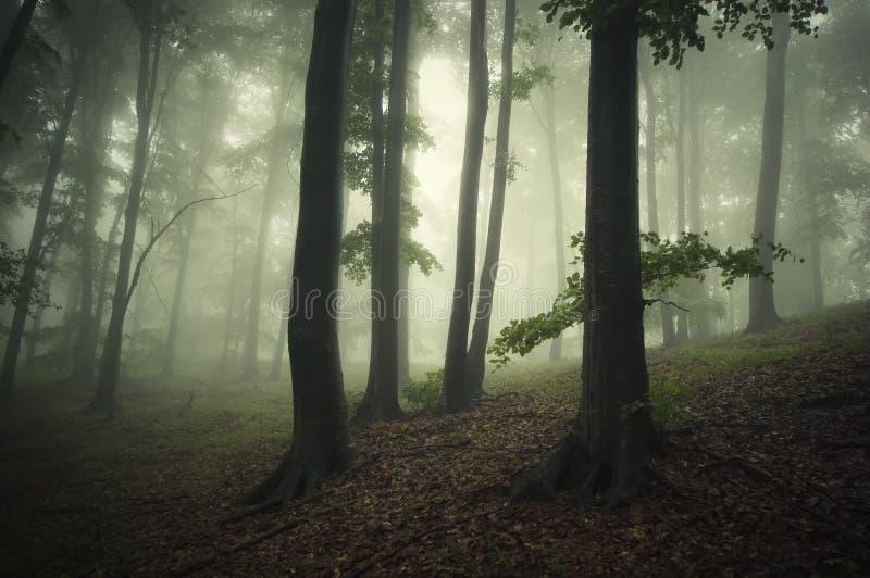Fantasiskog med grön dimma arkivbild