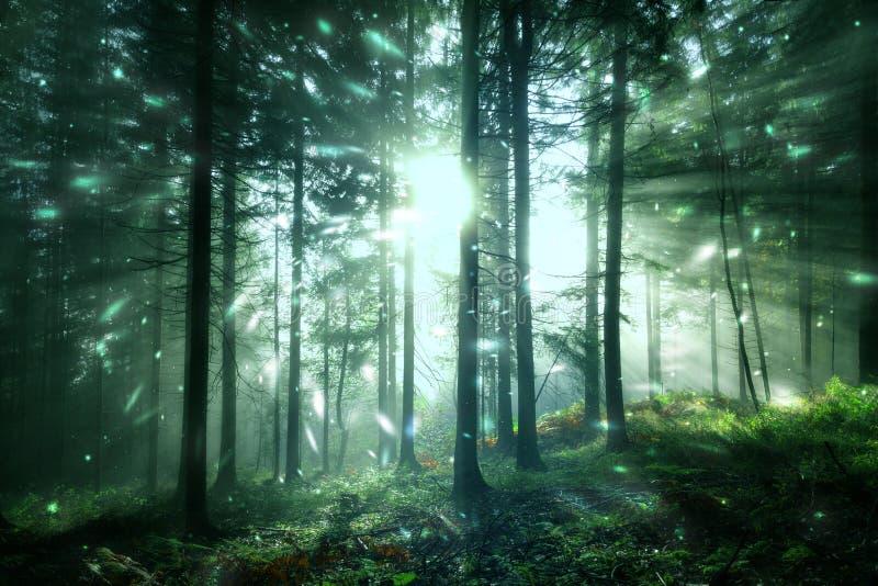 Fantasiskoglandskap med eldflugan royaltyfria foton