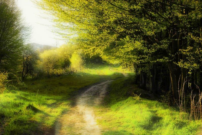 Fantasisommarlandskap med vandringsledet och skogsmark royaltyfri fotografi