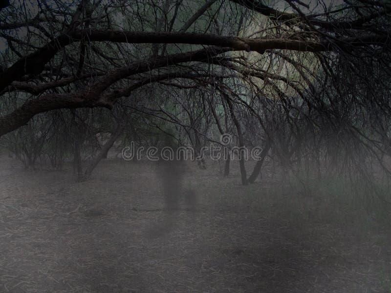 Fantasma Nas Madeiras Imagem de Stock