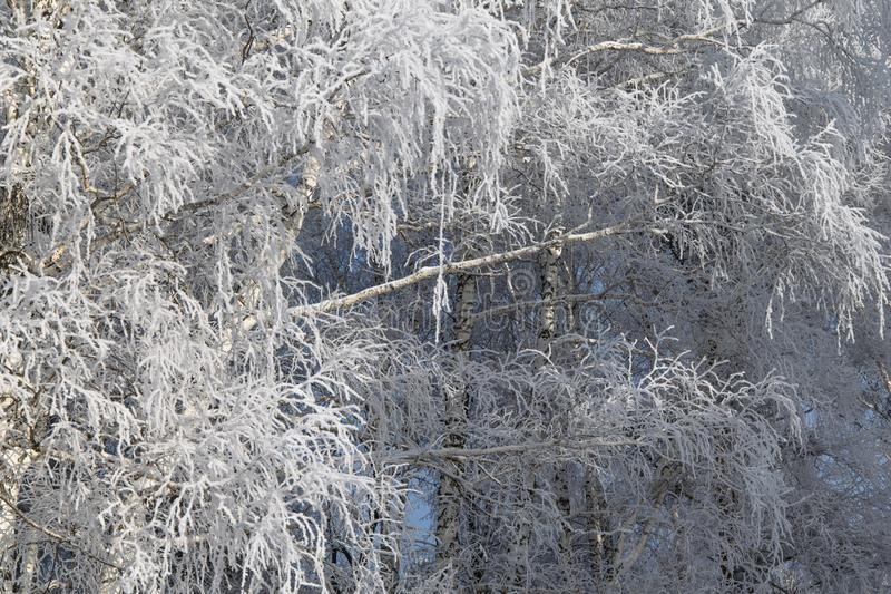 Frost on the branches of trees in the winter forest. royalty free stock photos