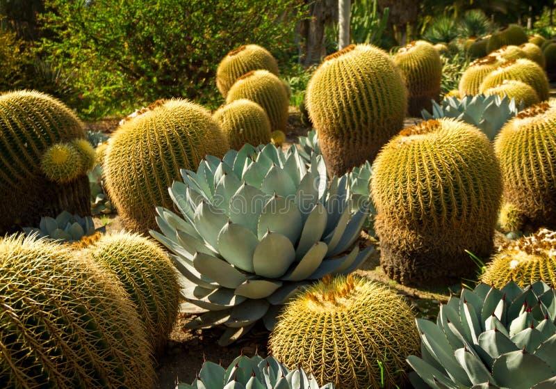 Fantastic desert garden in the bright sun royalty free stock photo