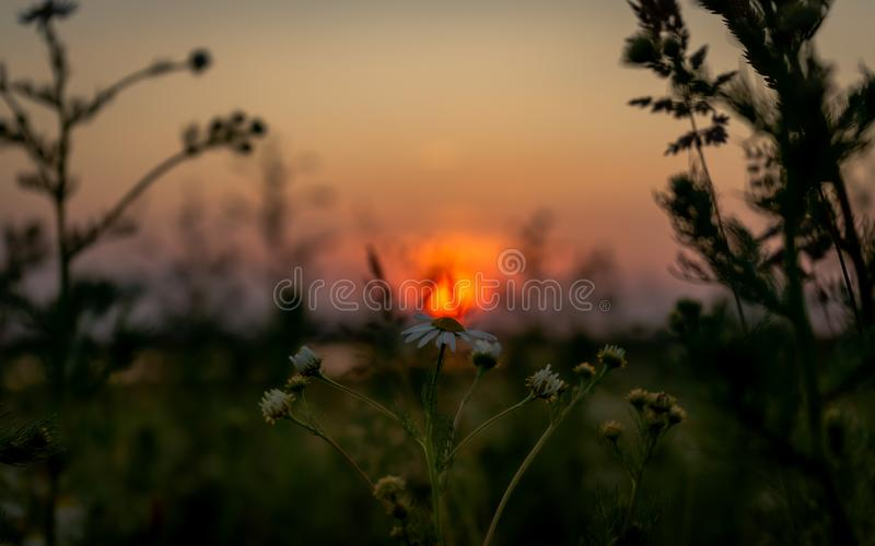 Fantastic evening panorama of sunset in the field royalty free stock images
