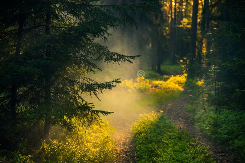 Fantastic fairy forest at dawn light royalty free stock images