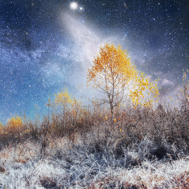 Fantastic landscape lonely tree in the early days of winter in t. He mountains under a starry night sky and the Milky Way. Courtesy of NASA. Carpathian, Ukraine stock photography