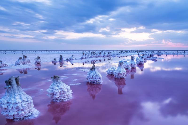 A fantastic picture of a salty pink lake with rows of salt columns in salt crystals after sunset. Long exposure, twilight. royalty free stock photography