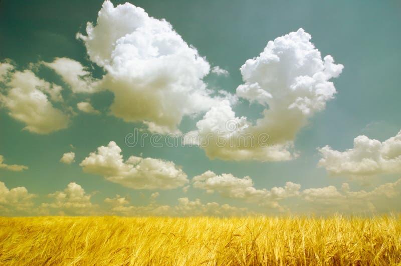 Fantastic summer landscape stock image
