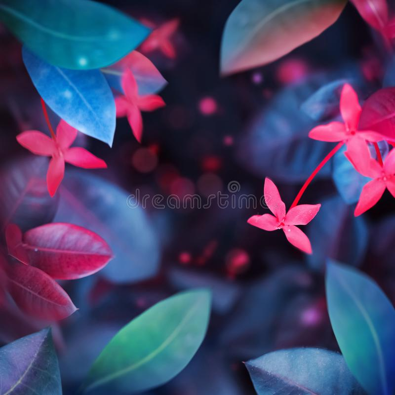 Fantastic summer tropical colorful flowers and leaves. Bright natural spring summer ultra image. Ultraviolet, pink, blue, aquamarine color. Free copy space royalty free stock photo