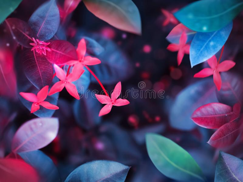 Fantastic summer tropical colorful flowers and leaves. Bright natural spring summer ultra image. Ultraviolet, pink, blue, aquamarine color royalty free stock photo