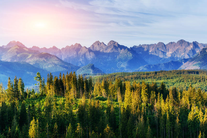 Fantastic sunset in the mountains of Ukraine. Good lighting tree. With sunlight in summer day. Mountains in the fog royalty free stock photo