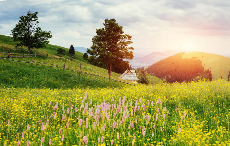 Fantastic sunset in the mountains of Ukraine. Summer field meado. W flowers royalty free stock photography