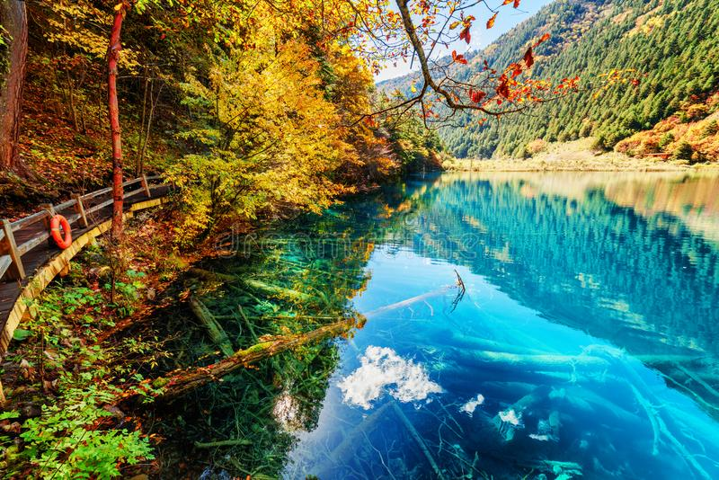 Fantastic view of lake with azure water among fall woods. Fantastic view of lake with azure water among colorful fall woods in the Shuzheng Valley, Jiuzhaigou stock images