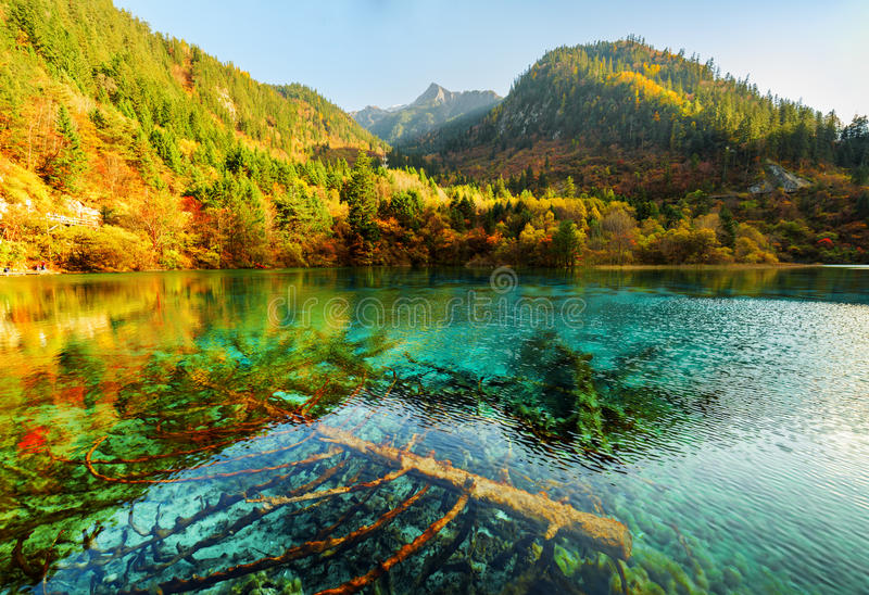 Fantastic view of submerged fallen trees in the Five Flower Lake. Fantastic view of submerged fallen trees in azure crystal clear water of the Five Flower Lake royalty free stock photos