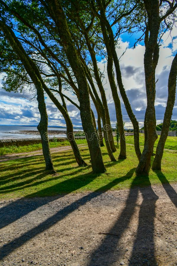 A fantastic view through the trees to the sea. Walk on the seafront in the late afternoon. beautiful colours and shadows thrown by trees, walking, weather, sun royalty free stock photo