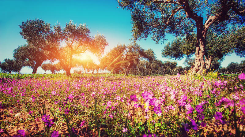 Fantastic views of the garden with blue sky. Mediterranean clima. Te. Gorgeous and picturesque scene. Location Sicily island, Italy, Europe stock photo