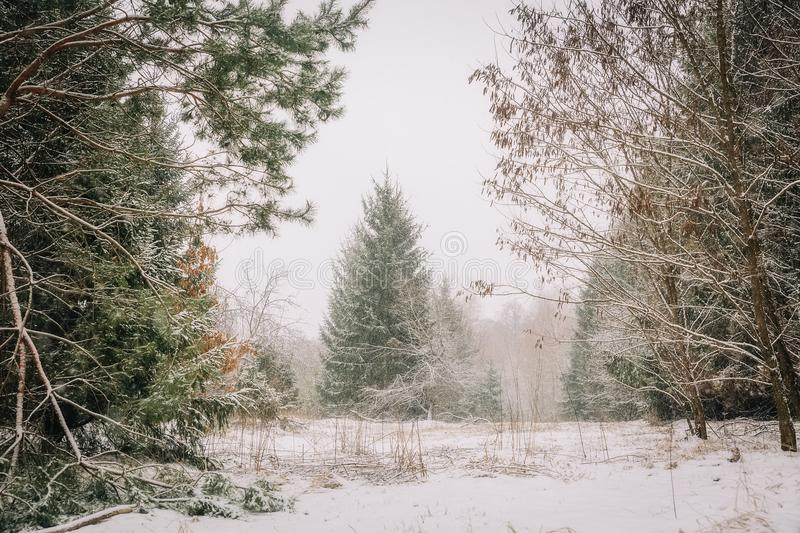 Fantastic winter landscape. On the eve of the holiday. The dramatic scene. Happy New Year. royalty free stock image