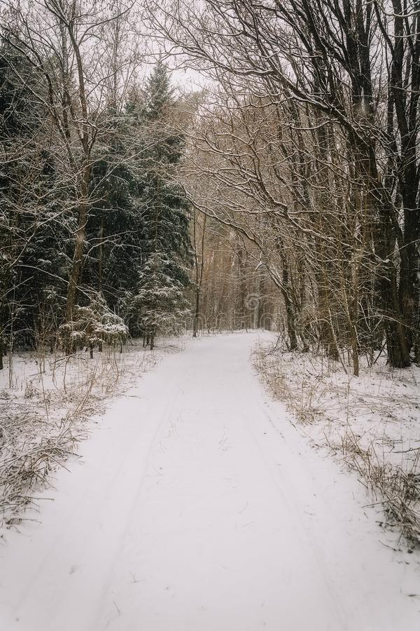 Fantastic winter landscape. On the eve of the holiday. The dramatic scene. Happy New Year. stock photography