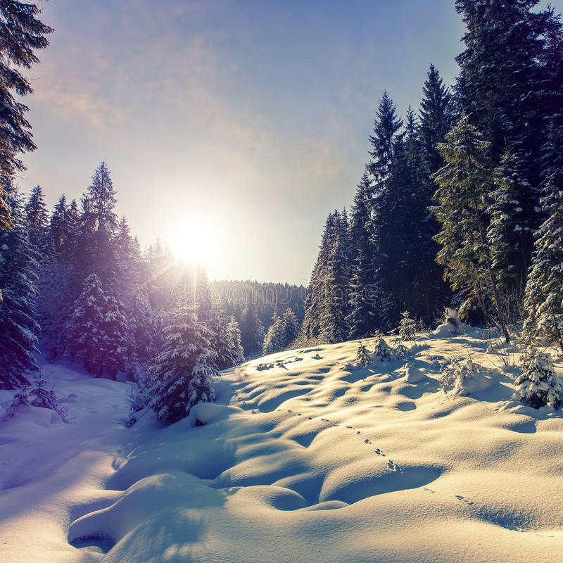 Fantastic winter mountain landscape. overcast colorful clouds, glowing in sunlight. alp trees, of snow covered , under stock images