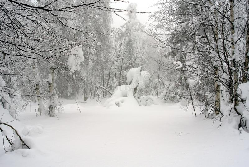 Fantastic winter in the Urals. A beautiful winter fairy tale. On the landscape you can see trees, rocks, foggy skies, frozen branches and needles. It looks like stock photography