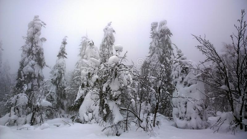 Fantastic winter in the Urals. A beautiful winter fairy tale. On the landscape you can see trees, rocks, foggy skies, frozen branches and needles. It looks like stock image