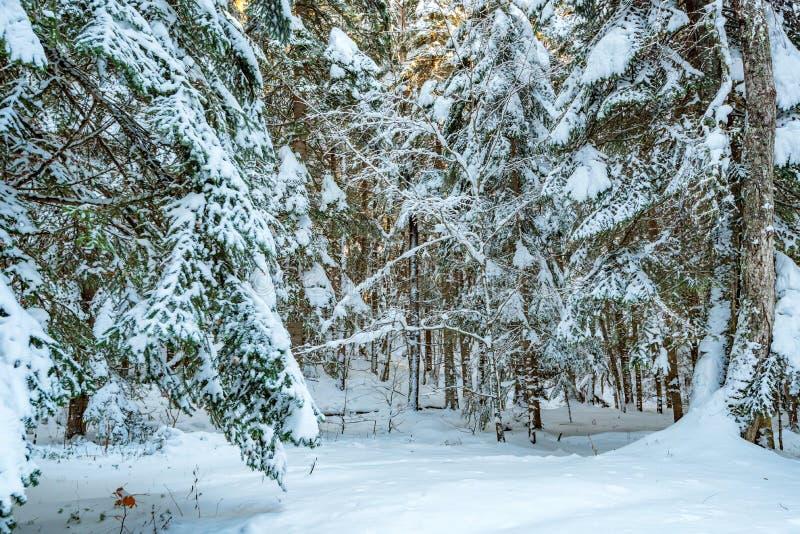 Download Fantastisch Die De Winterbos Met Sneeuw Wordt Behandeld Stock Afbeelding - Afbeelding bestaande uit mooi, sneeuw: 107700615