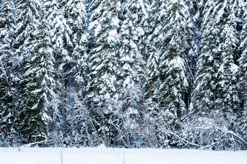 Download Fantastisch Die De Winterbos Met Sneeuw Wordt Behandeld Stock Foto - Afbeelding bestaande uit achtergrond, rand: 107700878