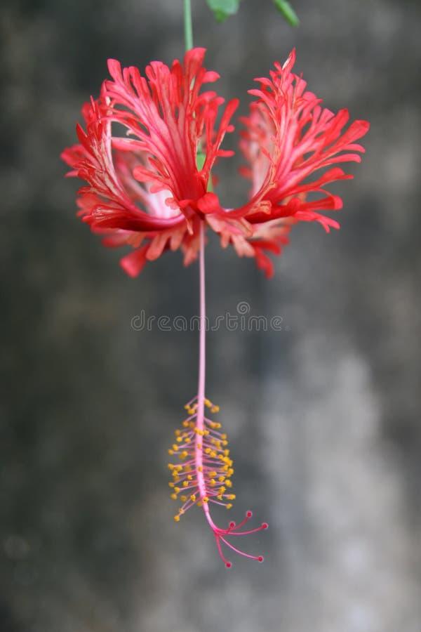Fantastische bloem royalty-vrije stock foto