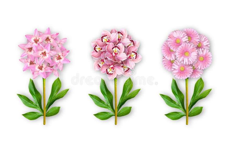 Fantastische Blume drei auf einem wei?en Hintergrund Die Zusammensetzung von rosa Lilien, von Orchideen und von Gerberas Kunstgeg lizenzfreie abbildung