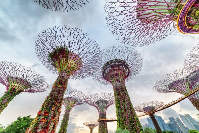 Fantastische bodemmening van het Supertree-Bosje met Skyway royalty-vrije stock foto