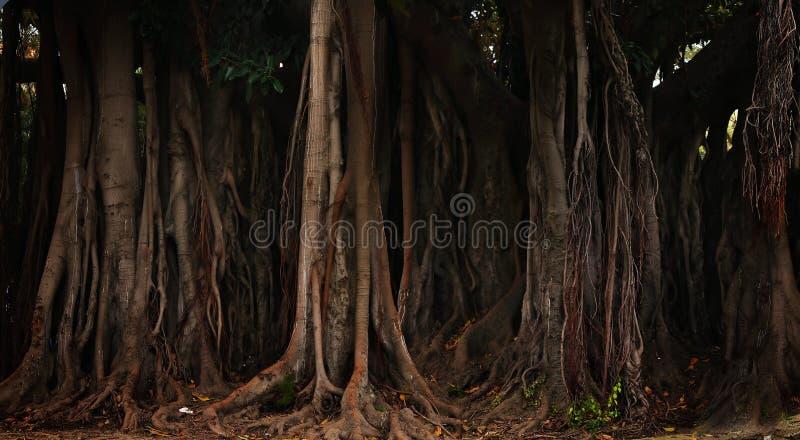 Fantastische bomen stock afbeeldingen