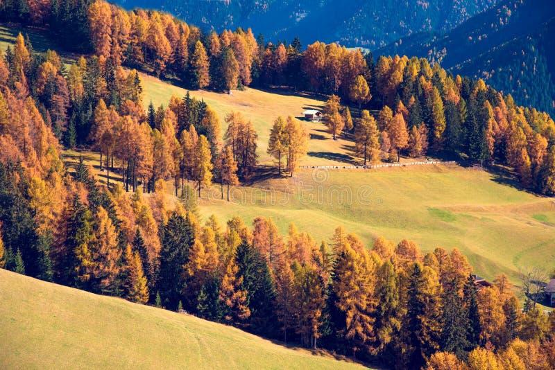 Fantastische Herbstlandschaft mit gelber Lärche an einem sonnigen Tag Dol stockbilder