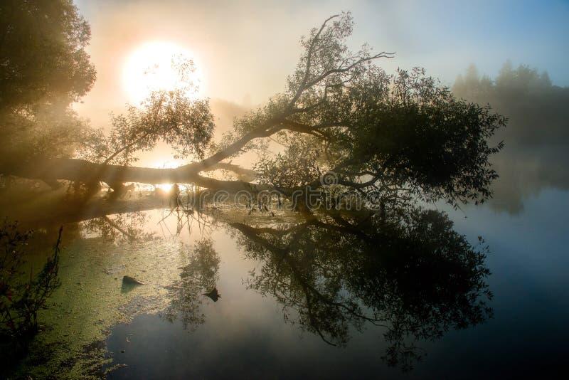 Fantastische mistige rivier met aardige weerspiegeling en stralen van licht in het zonlicht royalty-vrije stock afbeelding