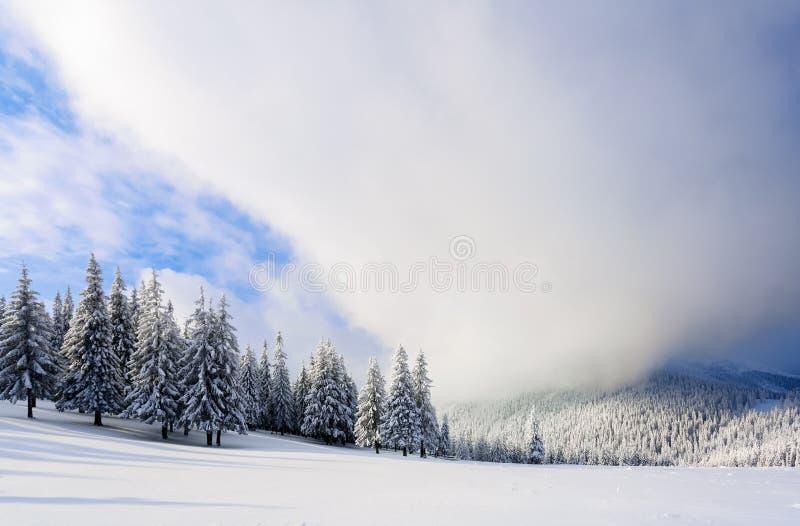 Fantastische pluizige Kerstbomen in de sneeuw Prentbriefkaar met lange bomen, blauwe hemel en sneeuwbank De winterlandschap in de royalty-vrije stock fotografie