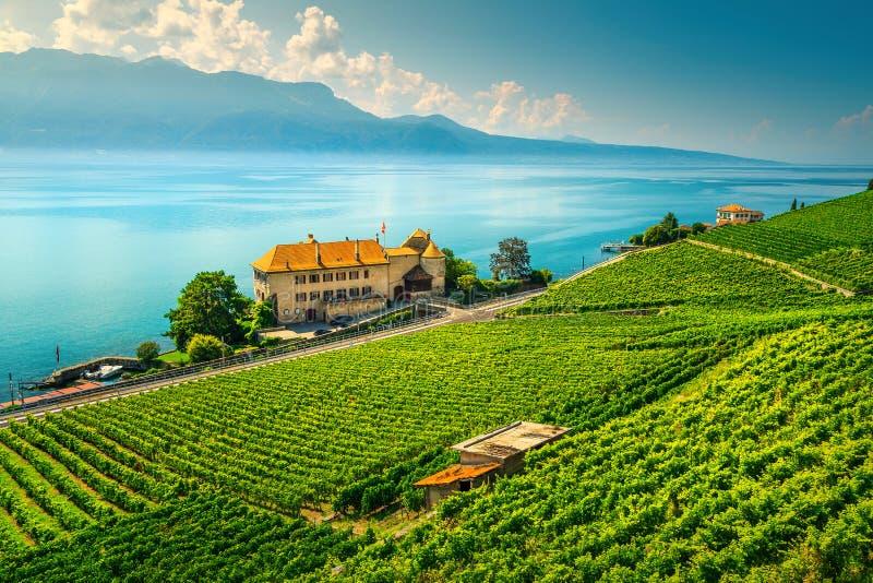 Fantastische wijngaarden in de regio Lavaux bij Rivaz, Vaud, Zwitserland royalty-vrije stock afbeelding