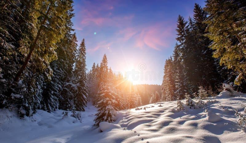 Fantastische Winterberglandschaft bew?lkte bunte Wolken, im Sonnenlicht gl?hend Alpenb?ume, des Schnees bedeckt, darunter lizenzfreie stockfotografie