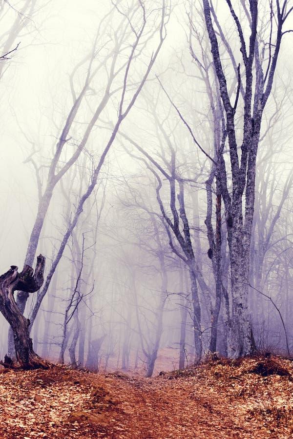 Fantastischer dunkler Wald lizenzfreie stockfotografie