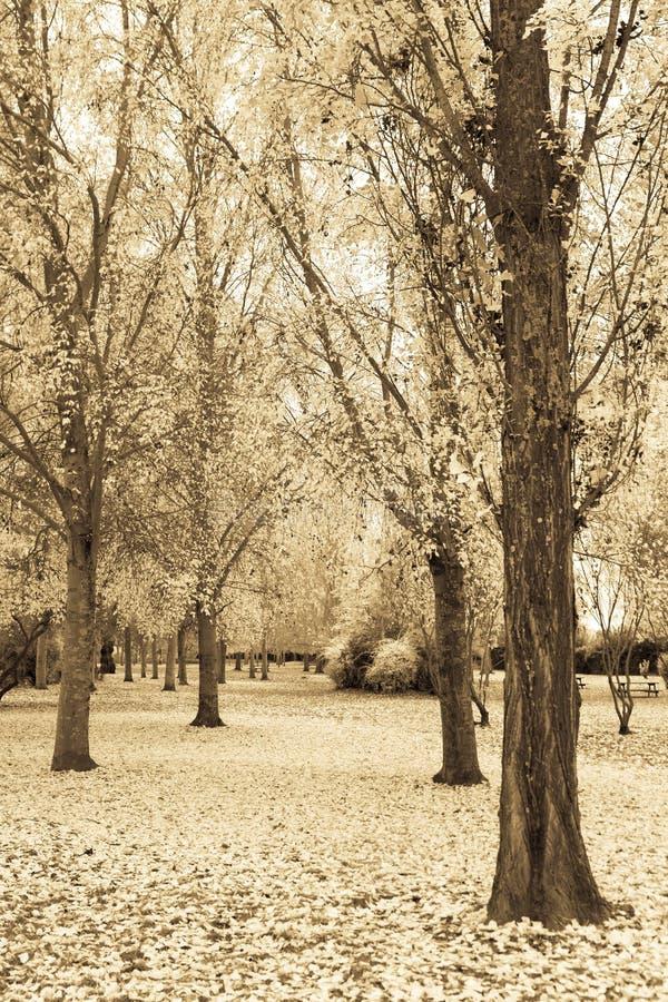 Fantastischer Landschaftspark im Herbst lizenzfreie stockfotos