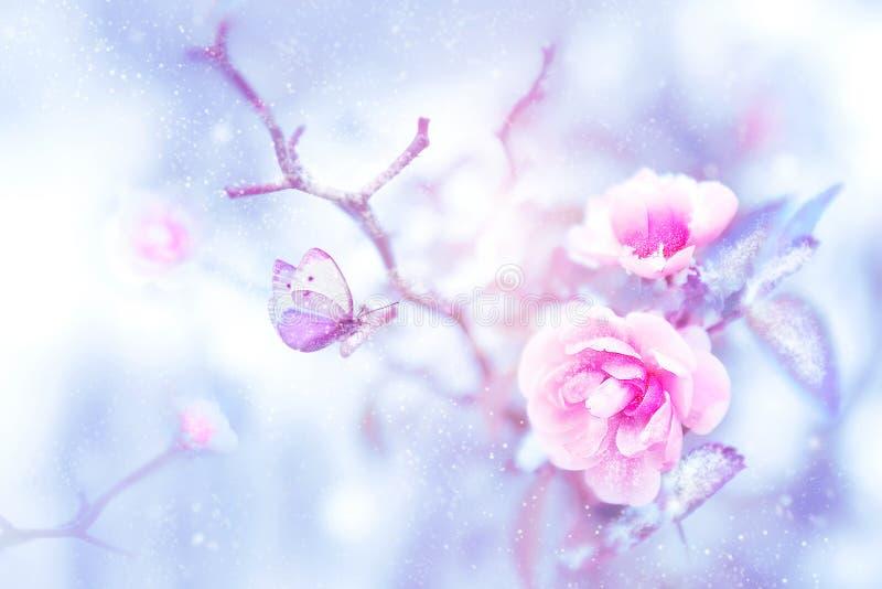Fantastischer schöner Schmetterling auf den rosa Rosen im Schnee und Frost Weihnachtskünstlerischen Bild lizenzfreie abbildung
