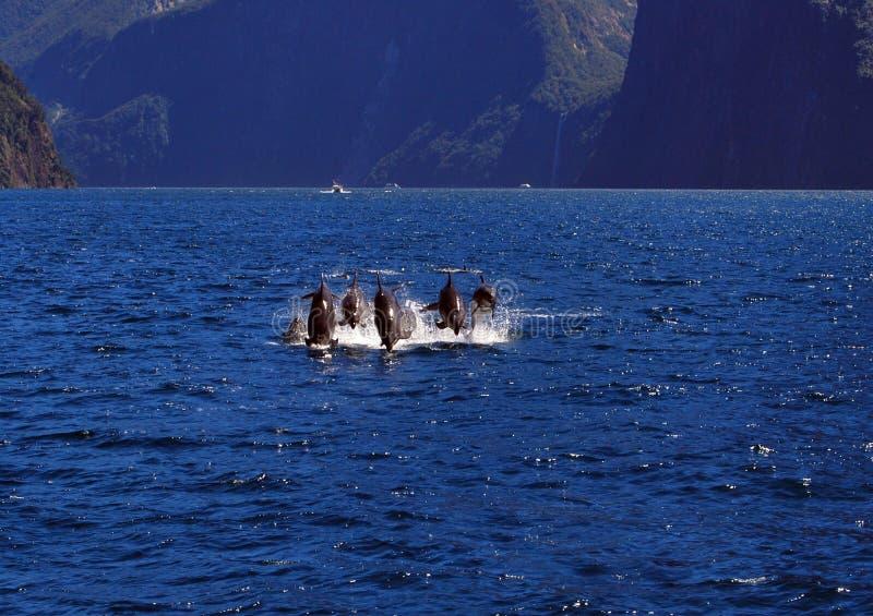 Fantastisk överraskning av delfin royaltyfri fotografi