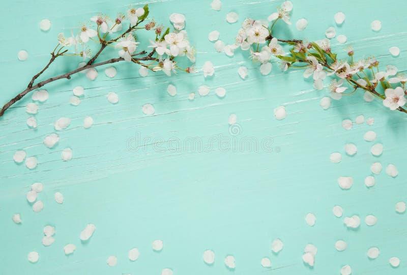 Fantastisk bakgrund med vita körsbärsröda blomningar royaltyfria bilder
