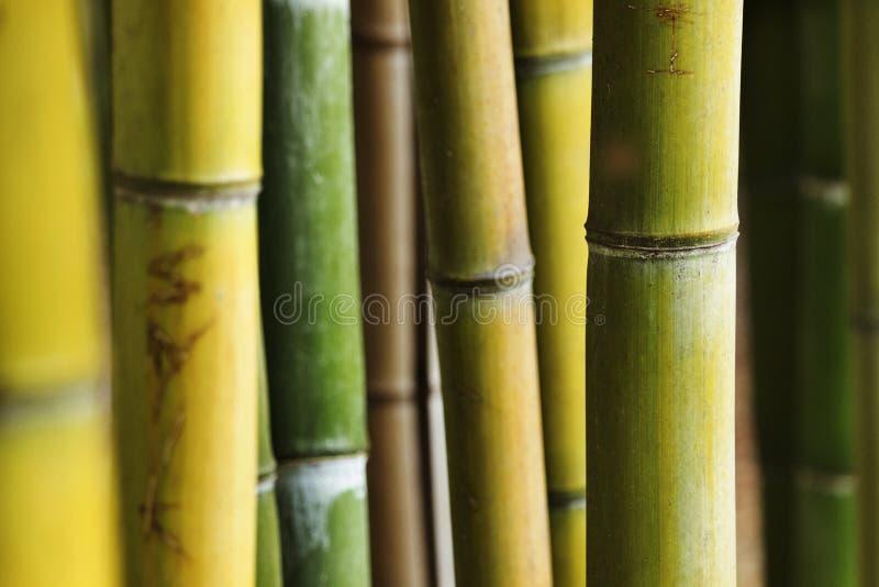 Fantastisk bambuskog royaltyfri fotografi